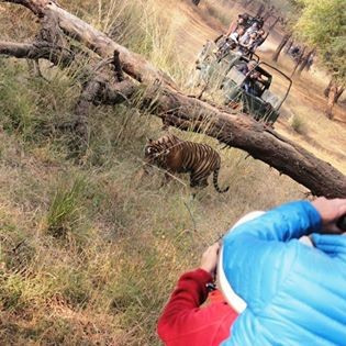 Tiger tours and Wildlife Holidays